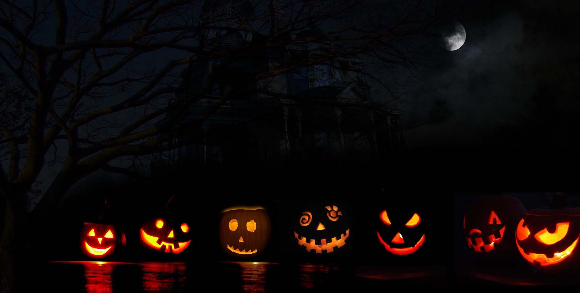 Des citrouilles d'halloween alignées