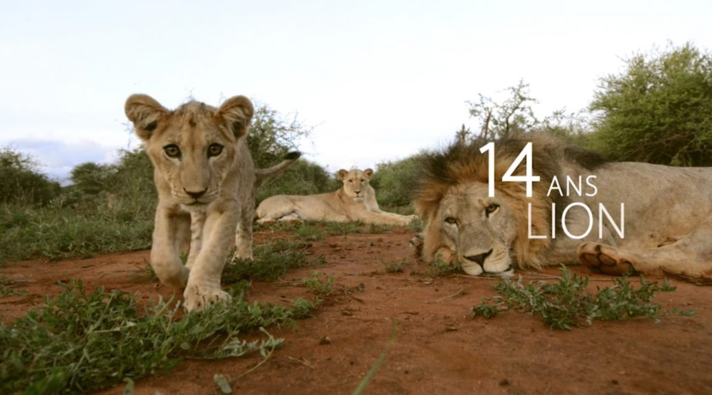 Vivre longtemps - 14 ans Lion