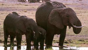 Vivre longtemps - Elephants 2