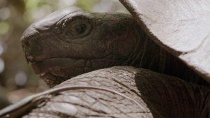 Vivre longtemps - tortue