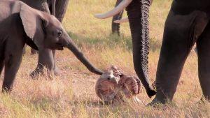 La vie prend fin - éléphants
