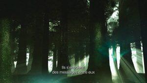 La terre vue du coeur - sociologie des arbres
