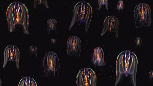 La terre vue du coeur - bioluminescence