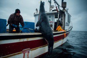 Chasseurs de phoques - Mais encore