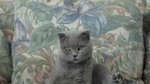Courts_internationale - All cats are grey in the dark