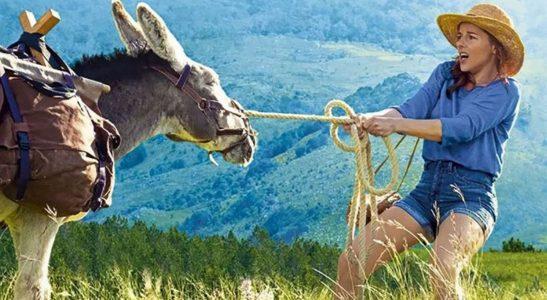 My Donkey, My Lover & I – A hilarious buddy movie